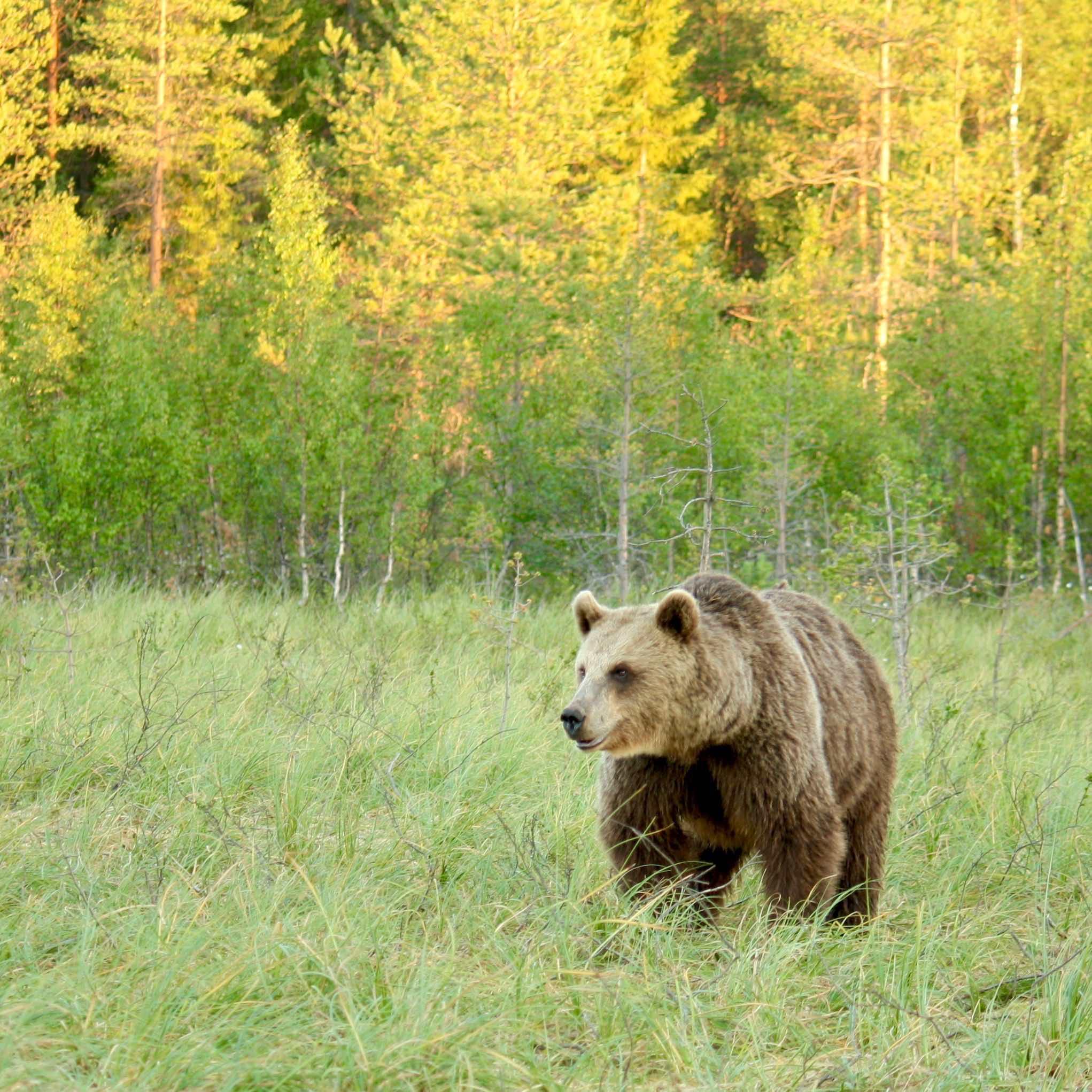 Iltaretki karhujen valtakunnassa | Outdoor option